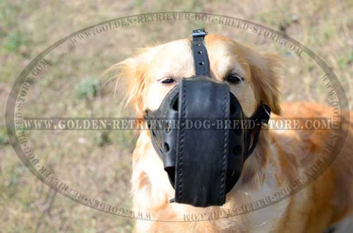 Golden Retriever Leather Muzzle for Safe Walking