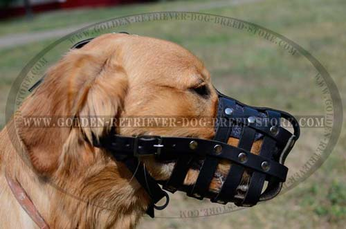 Practical Leather Muzzle for Active Dogs