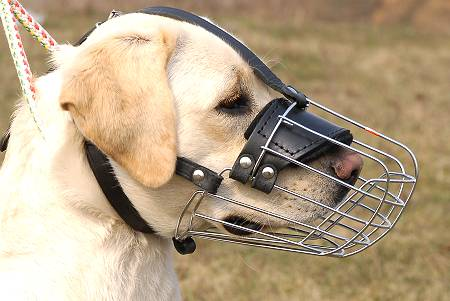 Metal Cage Muzzle for Golden Retrievers