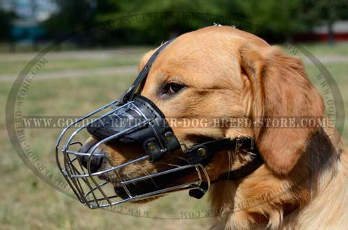 Wide Wire Cage Muzzle for Golden Retrievers