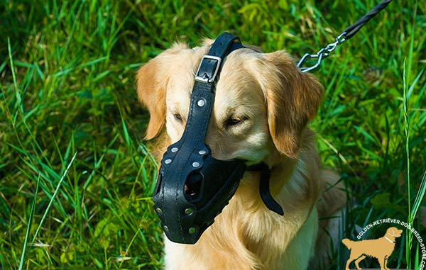 Multifunctional Golden Retriever Muzzle with  Straps