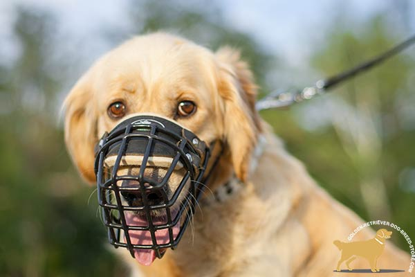 Ventilated Golden Retriever Muzzle with Padded Nose