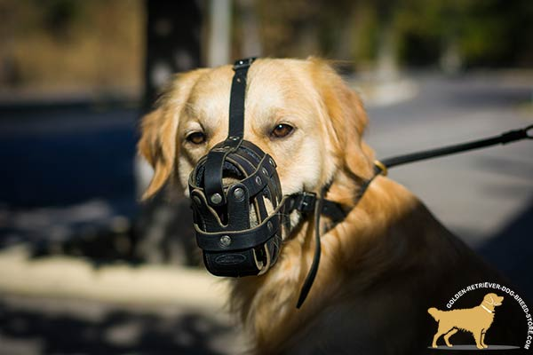 Golden Retriever leather basket muzzle easy-to-adjust padded with felt for basic training