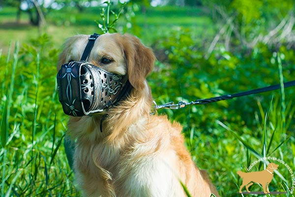 Golden-Retriever leather muzzle exclusive with padded nose for advanced training