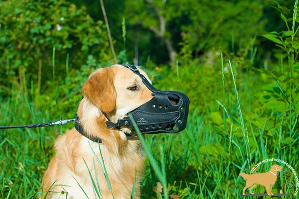 Golden-Retriever leather muzzle anti-barking hardware for police work