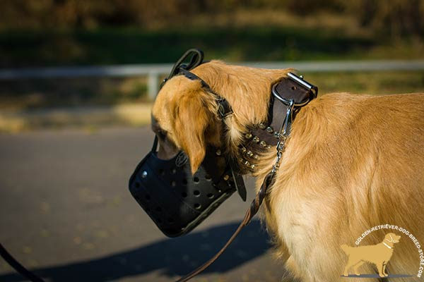 Golden-Retriever leather muzzle for snug fit with adjustable straps for basic training