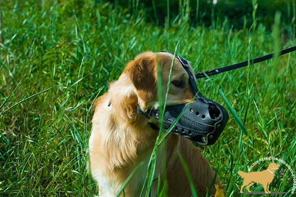 Golden-Retriever leather muzzle ventilated with holes for agitation training