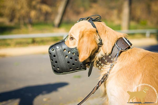 Golden-Retriever leather muzzle of high quality with nickel plated hardware for daily walks
