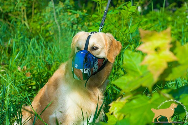 Golden-Retriever leather muzzle of high quality adjustable  for stylish walks