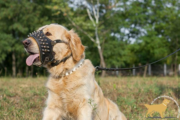 Golden-Retriever leather muzzle for snug fit Nappa padded for utmost comfort
