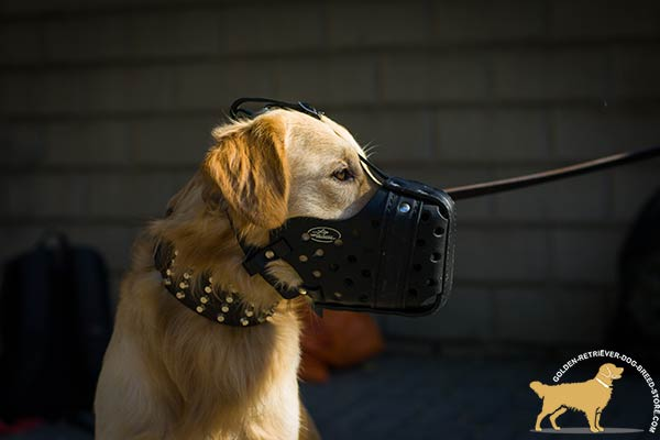 Golden-Retriever leather muzzle well ventilated padded with felt for utmost comfort