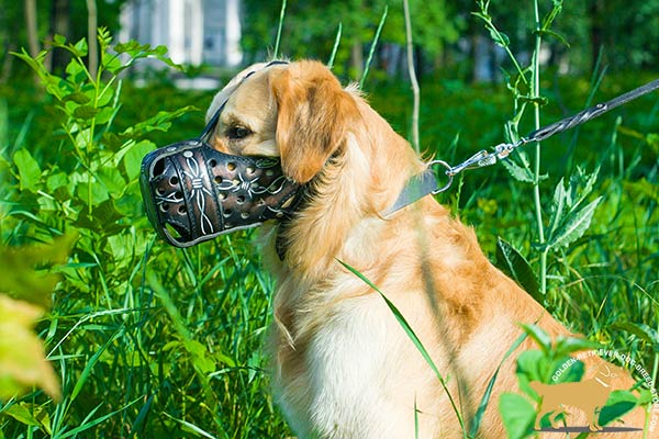 Golden-Retriever leather muzzle ventilated with holes for utmost comfort