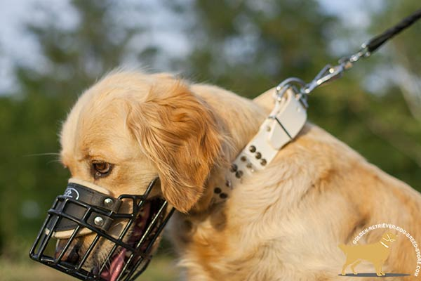 Golden Retriever wire cage muzzle of high quality with padded nose for utmost comfort