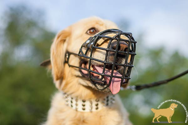 Golden Retriever wire cage muzzle for snug fit with adjustable straps for daily activity