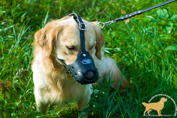 Handcrafted Golden Retriever Muzzle of Hard Leather