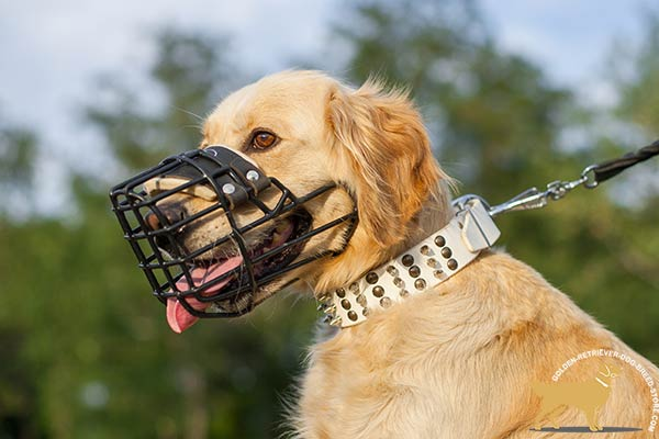 Lightweight Metal Muzzle for Golden Retriever