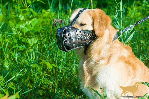 Leather Golden Retriever Muzzle with Barbed Wire Painting