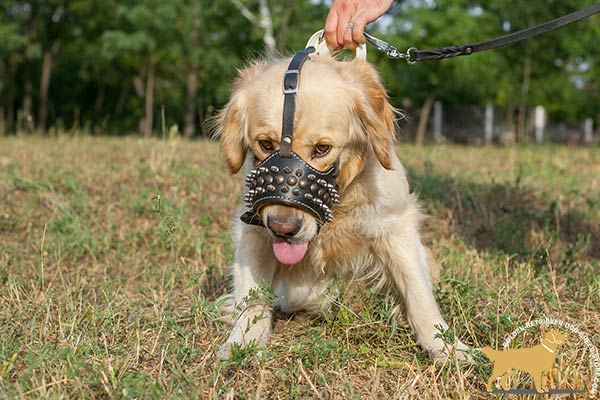 Royal Design Leather Golden Retriever Muzzle