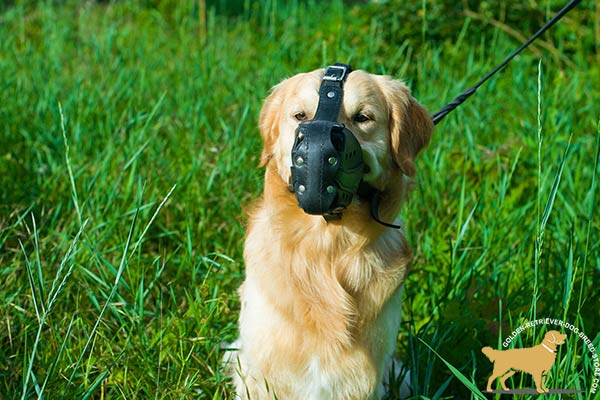Ventilated Golden Retriever Muzzle with Thick Nose Padding