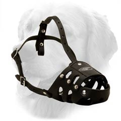 Leather Muzzle Golden Retriever