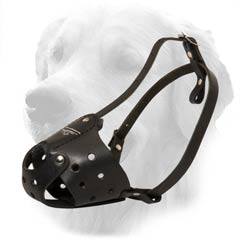 Golden Retriever Strong Leather Muzzle