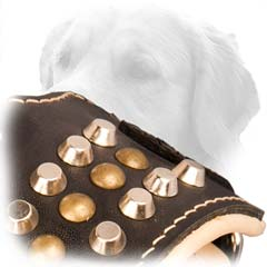 Studded Leather Muzzle For Goldens