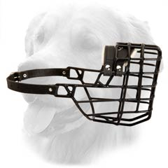 Golden Retriever Winter Muzzle