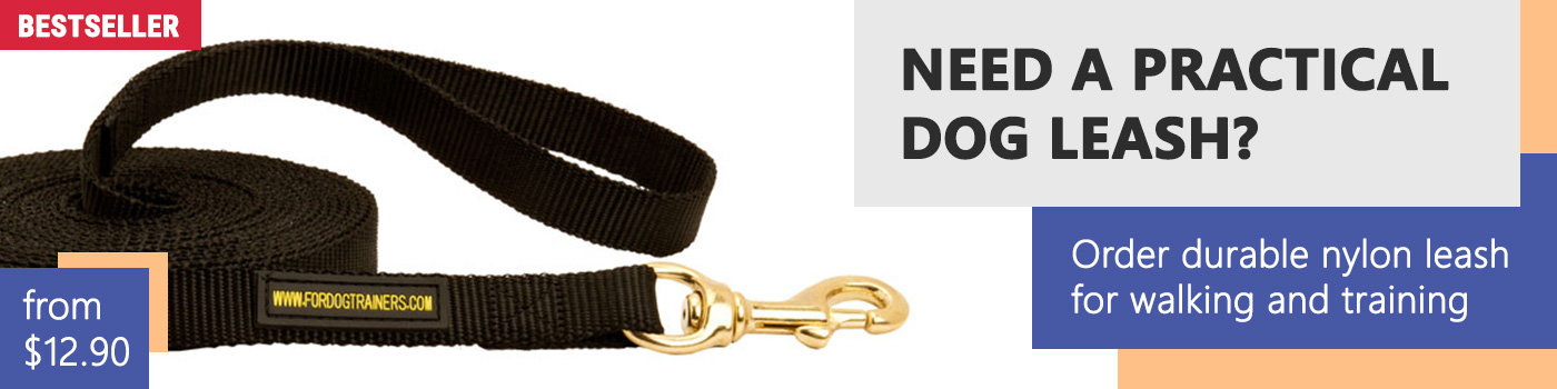 Golden Retriever Nylon Leash Training