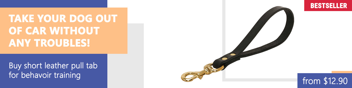 Golden Retriever Leather Leash Short
