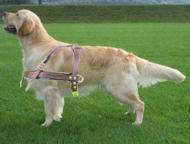 Golde Retrieve Tracking/Pulling Leather Dog Harness also walking